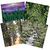 Paper Pizazz® 11¾ x 12 *Forest Scenes* Patterned SCRAPBOOK PAPER Assortment